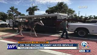 Horse killed, another injured in St. Lucie County roadway incident