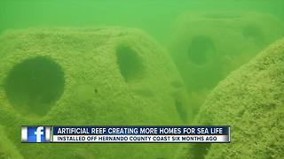 Artificial reef pilot project becomes home for marine life in Hernando County
