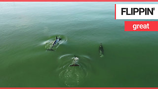 Stunning drone footage shows dolphins playing off the British coast
