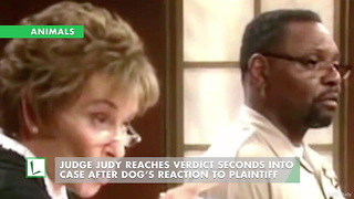 Judge Judy Reaches Verdict Seconds into Case after Dog's Reaction to Plaintiff - Video