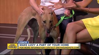 Rescues in Action: Say hi to Lizzy, our June 10 superstar