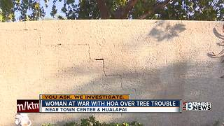 Woman at war with HOA over tree troubles - Video