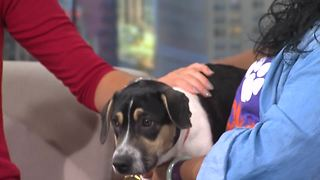 Pet of the Week: Tyche - Video