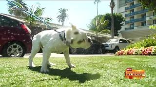 National Spoil Your Dog Day - Video