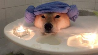 Dog tired relaxation – Dog enjoys relaxing bubble bath - Video