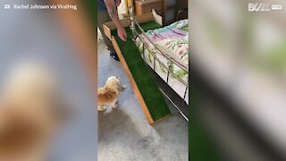 Dad builds ramp for dog with back problems