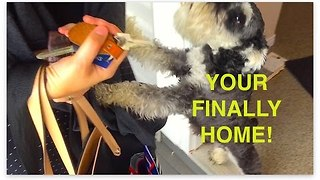 Puppy Has Best Reaction Ever to Owners Returning Home