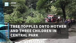 Tree Topples Onto Mother And Three Children In Central Park - Video
