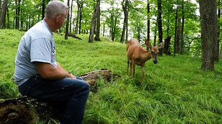 Deer brings fawns running from the forest to share apples - Video