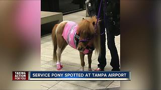 When horses fly: pony rides Southwest Airlines - Video