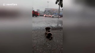 Chilled out puppy calmly watches the rain fall