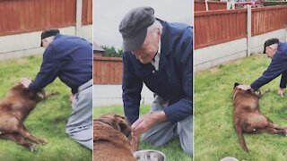 90-year-old neighbor comes to say goodbyes to dog on its final days
