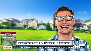 pets eclipse - Video