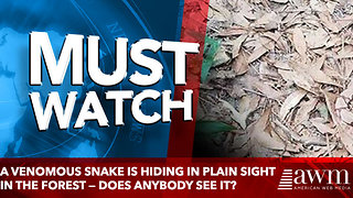 A venomous snake is hiding in plain sight in the forest — does anybody see it? - Video