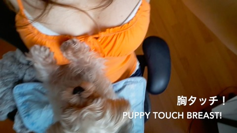 Puppy Touch Breast! 胸タッチ犬!