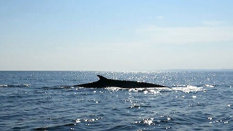 Research boat has extremely close encounter with fin whale