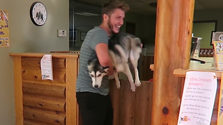 Husky emotionally reunited with owners after week apart - Video