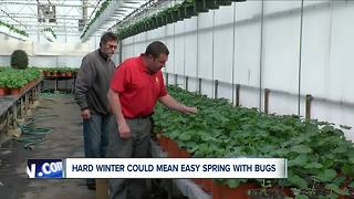 WNY's long winter could decrease spring pests - Video