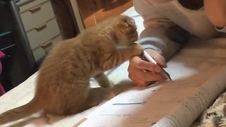 Playful kitten makes it difficult for owner to do homework - Video