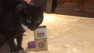Funny Sid the Cat helps Himself to Catnip  - Video
