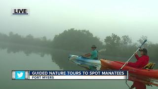 Guided Kayak Nature Tours help spot manatees in Southwest Florida - 7am live report