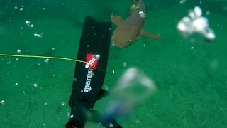 Man Chased by Shark While Spearfishing off Florida Coast - Video