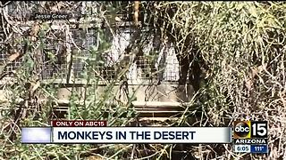 Monkey facility run by out-of-state university - Video