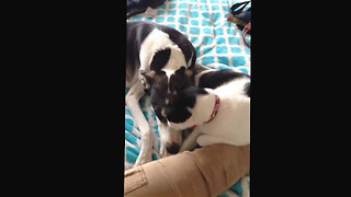 Cat and Dog are the Best of Friends - Video