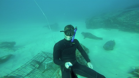 Diver chills out with friendly seals on ocean floor