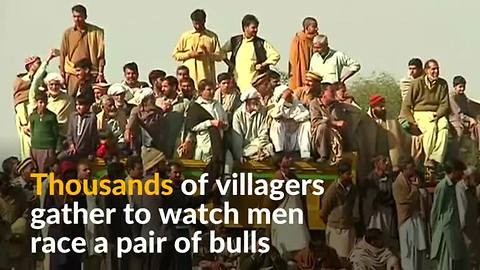 In the face of insurgencies, bull racing is welcome distraction in Pakistan