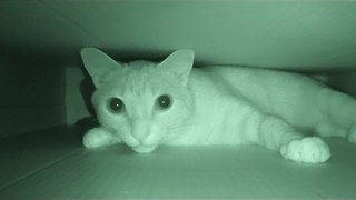 Are Your Cats Most Active At Night? - Video