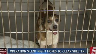 Operation Silent Night Aims To Help Get More Pets Adopted - Video