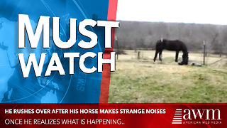 He Rushes Over After His Horse Makes Strange Noises, Quickly Realizes What's Happening - Video