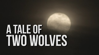 A Tale of Two Wolves - Video
