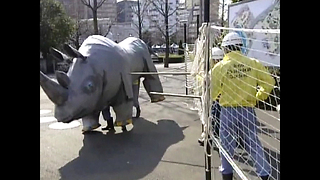 Weird Japanese Zoo Drill - Video