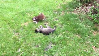 Puppy obsessed with kitty cat playtime