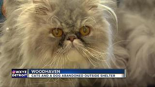 Woman abandons cats outside of Woodhaven - Video