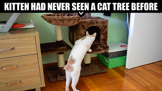 Kitten Had Never Seen A Cat Tree Before - Video