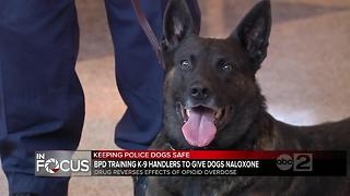 Baltimore City Police training all K-9 handlers to administer naloxone to dogs - Video