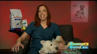 Does Your Pet Have Allergies? - Video