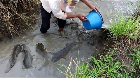 Fish Trap-making--Cambodian-style! 1