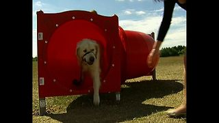 Doggie Exercise Center - Video