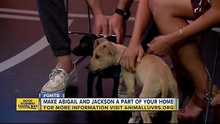 Rescues in Action: Make Jackson and Abigail welcome additions to your home - Video
