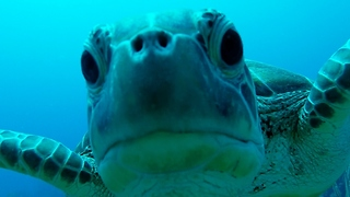 Diver captures underwater world of mystery and beauty - Video