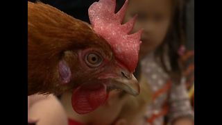 Chicken Racing - Video