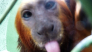 Rescued Monkeys Are Extremely Curious About Cameras - Video
