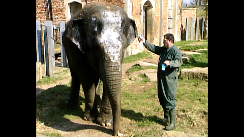 Elephant Uses Moisturizer