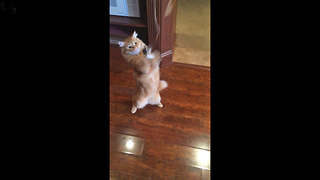 Funny Cat gets Claws stuck in Catnip Toy - Video