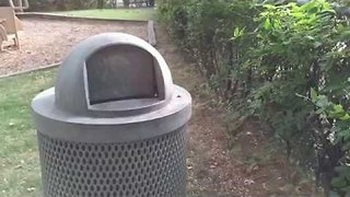 "Canadian Man Takes Squirrel to Task for Rummaging Through ""Public Garbage"" - Video"
