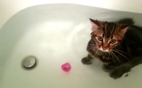 6 Cats That Confirm Our Love For Cats